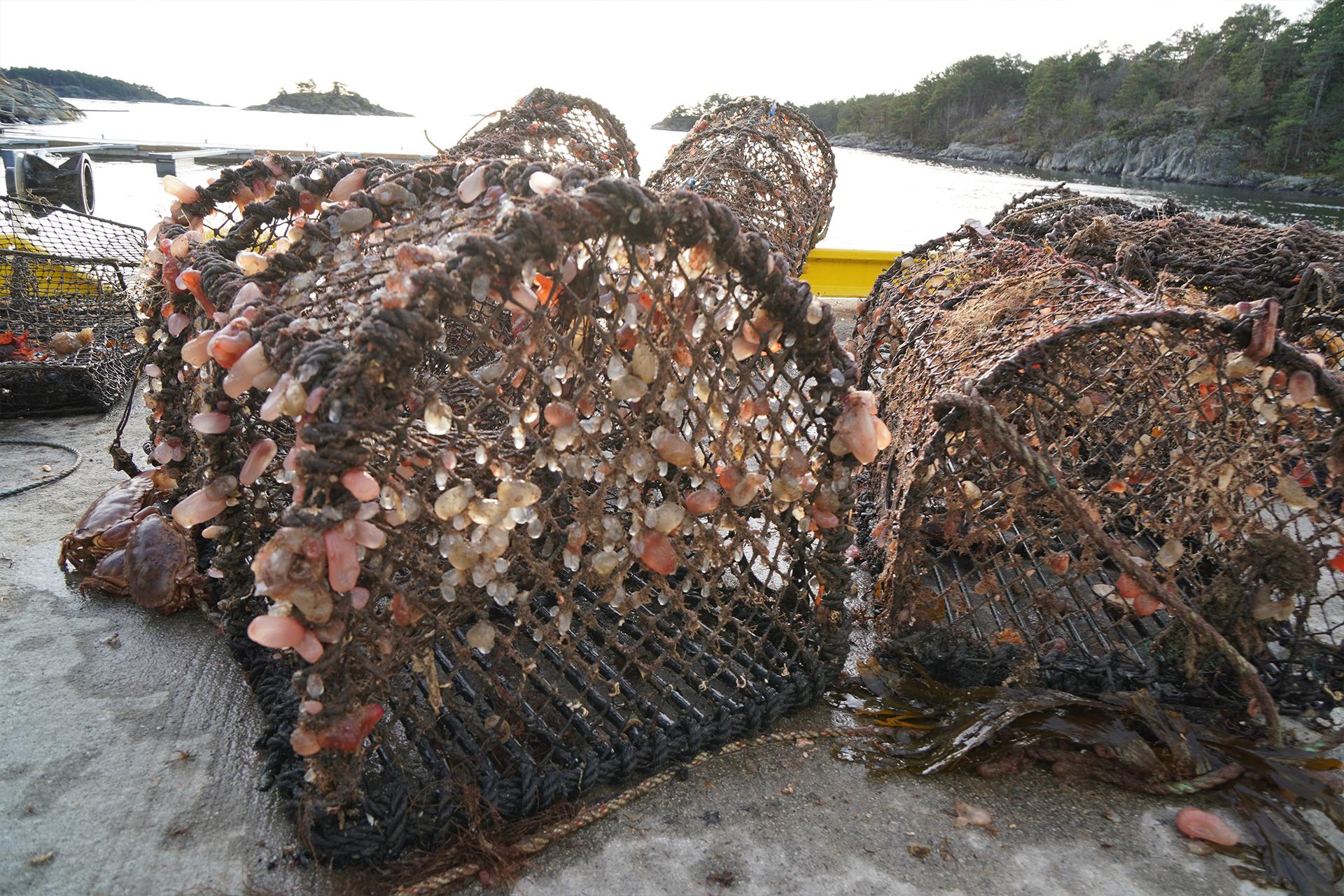 Gammelt fiskeredskap som har ligget lenge på havbunnen