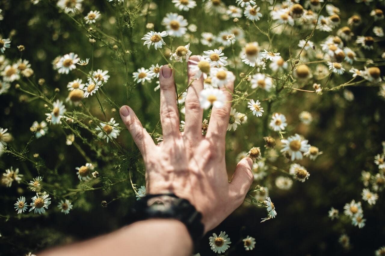 Utstrukken hånd som tar forsiktig på små hvite blomster