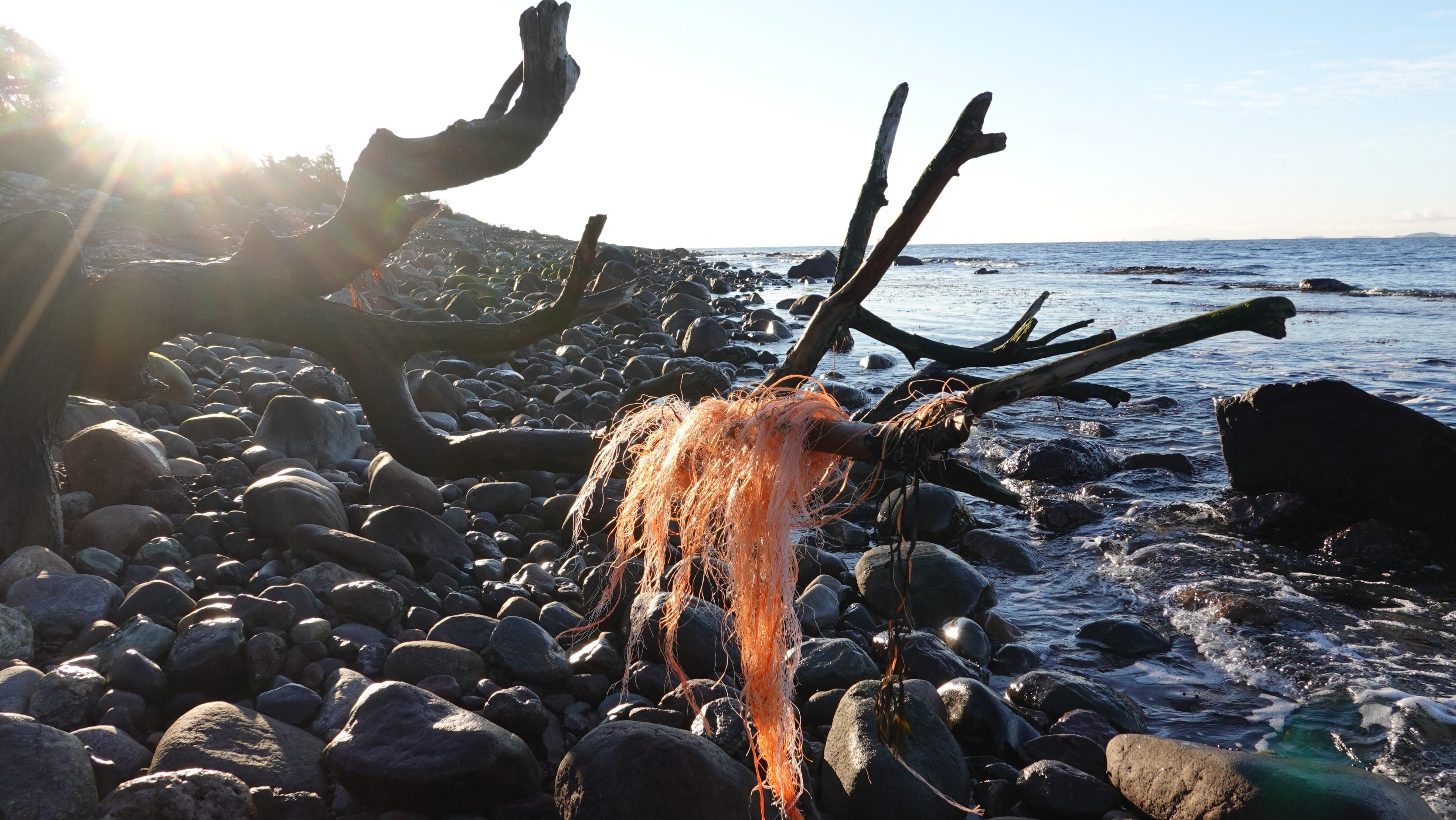 Oransje plasttråd hengende i en grein på en steinete strand