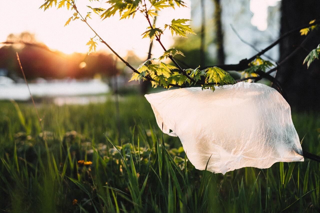 Bilde av en plastpose som henger på en grein
